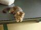 新しくできた猫カフェ『cat cafe nyanny』に行ったきた!